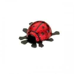 Schokolade-Glückskäfer klein rot